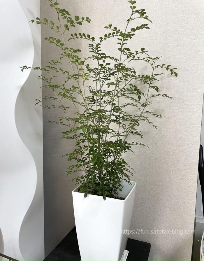 ふるさと納税 観葉植物
